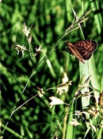 Farfalle_1
